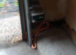 What a Snake in Your Basement Can Teach You   DeniseMpls
